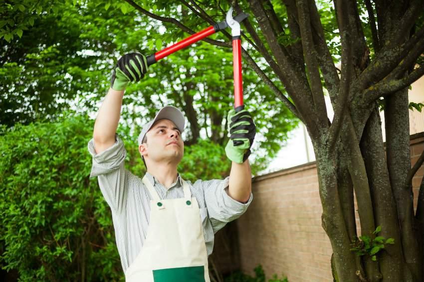 Obligations et tarifs lagage des arbres for Tarif entretien jardin