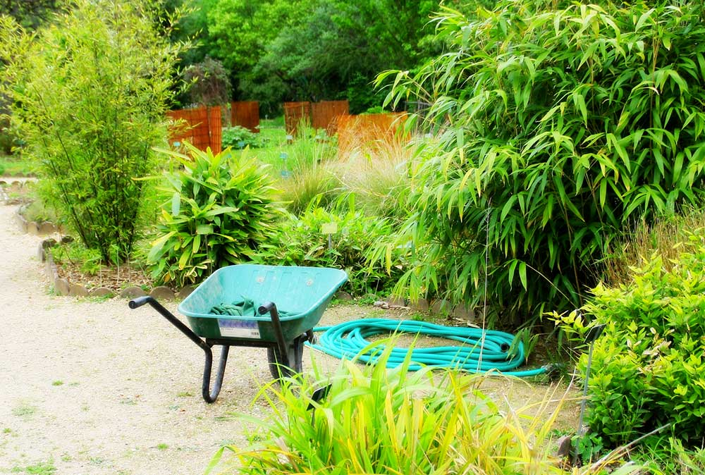 Prix et plantation d 39 une haie de bambous for Prix jardin