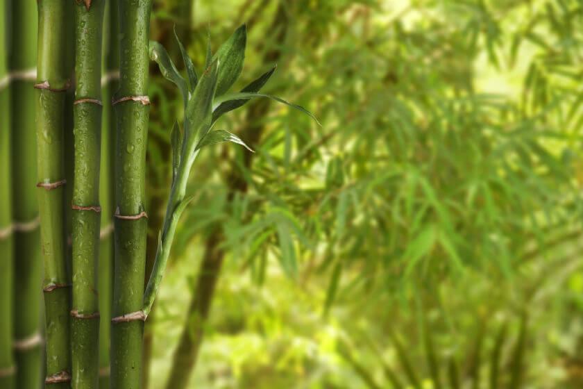 Prix d 39 un jardin japonais for Haie de jardin plante