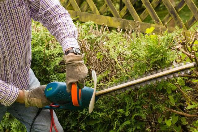 Obligations et tarifs lagage des arbres for Entretien jardin obligation