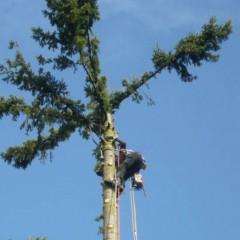 Prix d'abattage d'arbre