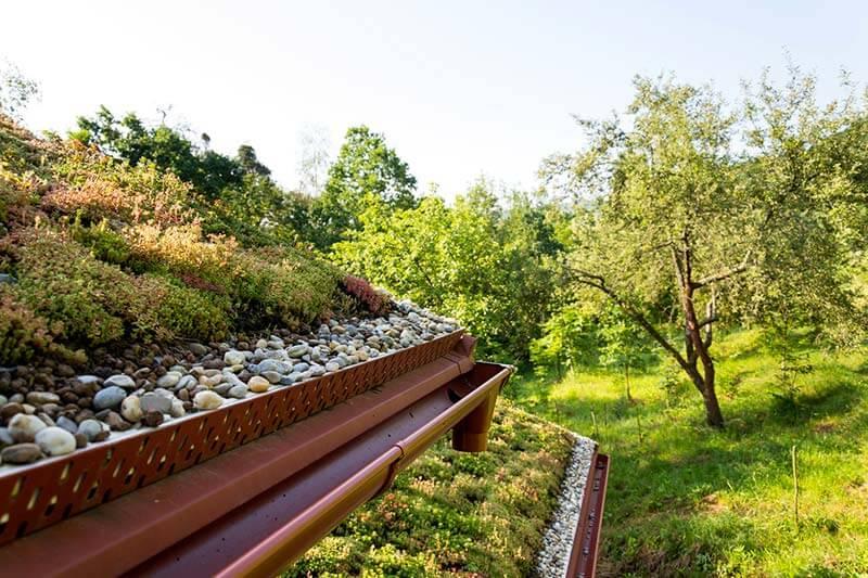 avantages toiture végétale