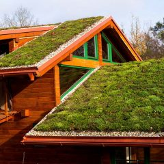 Végétalisation d'une toiture