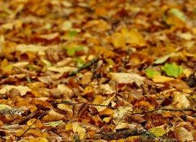 Entretien jardin : prix du ramassage de feuilles mortes