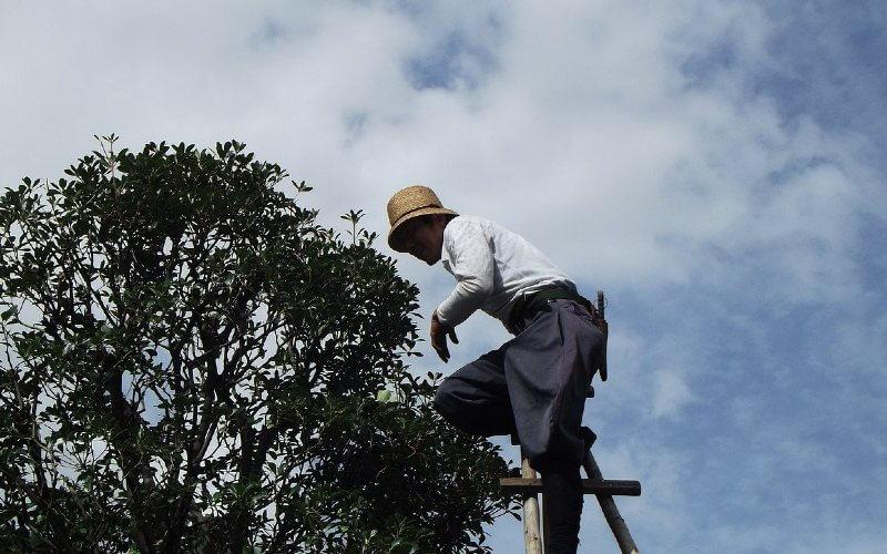 paramètres coût écimage d'arbre