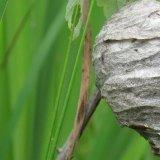 Se débarrasser d'un nid de guêpes
