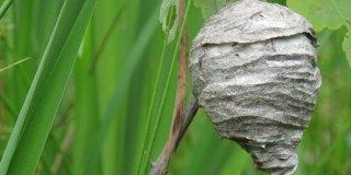 éliminer un nid de guêpes